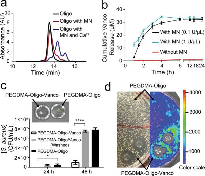 MN-triggered oligo cleavage and the antibacterial activities of PEGDMA-Oligo-Vanco hydrogel in vitro . (a) GPC traces of intact oligo (black) and oligo upon treatment with MN with (blue) and without (red) Ca 2+ . (b) Cumulative vancomycin (Vanco) release from PEGDMA-Oligo-Vanco hydrogel incubated with (black and blue) and without (red) MN. Differences at all given time points were significant ( p ≤ 0.0001). (c) Total bacterial counts after 24 and 48 h of Xen-29 S. aureus culture in LB media containing PEGDMA-Oligo-Vanco, washed PEGDMA-Oligo/Vanco, or PEGDMA-Oligo hydrogels ( n = 3; inset, corresponding IVIS image of the PEGDMA-Oligo-Vanco and PEGDMA-Oligo hydrogels retrieved after 48 h in S. aureus culture). (d) Photograph (left) and IVIS image (right) of an LB agar plate of Xen-29 S. aureus culture 24 h after placement of PEGDMA-Oligo-Vanco and PEGDMA-Oligo hydrogel discs ( n = 2 shown) over the agar plate. Error bars represent standard deviations. * p ≤ 0.05, ** p ≤ 0.01, *** p ≤ 0.001, **** p ≤ 0.0001 (two-way ANOVA).