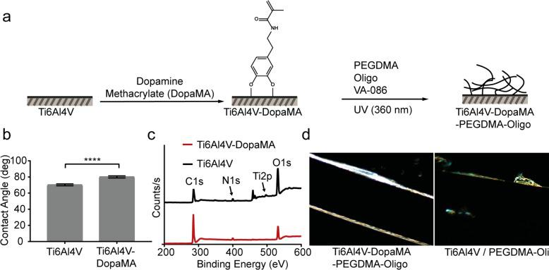 Surface modification and characterization of Ti6Al4V plates. (a) Schematic of sequential DopaMA and PEGDMA-Oligo hydrogel coatings on Ti6Al4V substrates. (b) Water contact angle ( n = 6) of Ti6Al4V and Ti6Al4V-DopaMA. Error bars represent standard deviations, **** p ≤ 0.0001. (c) XPS scans on the Ti6Al4V surfaces before and after DopaMA immobilization. (d) Dark field optical micrographs of PEGDMA-Oligo coating on Ti6Al4V-DopaMA vs Ti6Al4V IM pins (1 mm in diameter). Magnification: 50×.