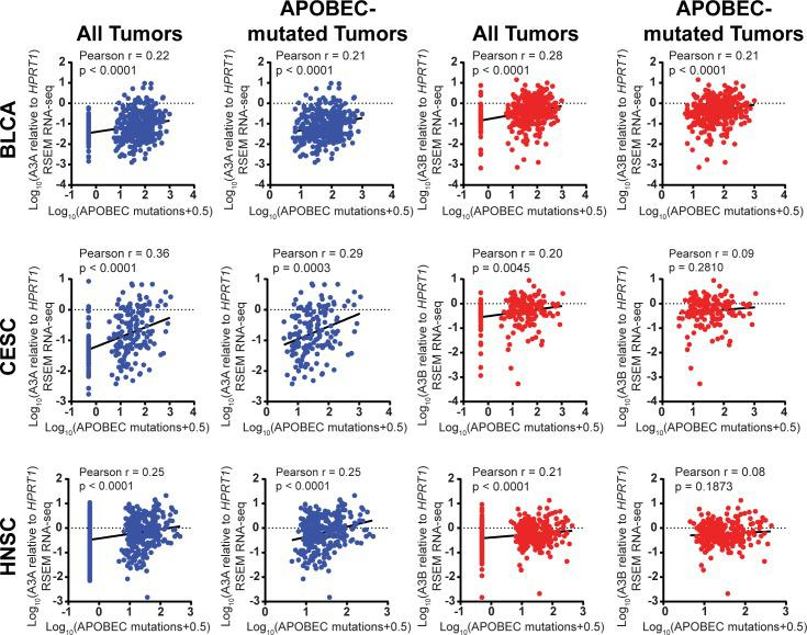 Correlation of A3A expression with APOBEC-induced mutations in multiple cancer types. RSEM normalized RNA-seq values for A3A (blue) and A3B (red) were obtained for 410 bladder (BLCA), 197 cervical (CESC), and 549 head and neck (HNSC) cancers assessed by the Cancer Genome Atlas. Expression of each APOBEC was normalized to HPRT1 and compared to the minimum estimate of APOBEC-induced mutations in the corresponding samples. A3A expression strongly correlates with mutagenesis in each tumor type by Pearson correlation analysis even when only evaluating APOBEC mutated tumors.
