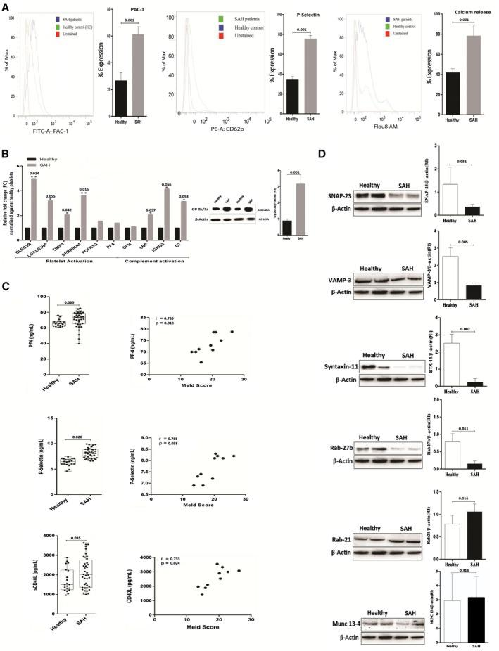 Validation of platelet functionality in SAH. (A) Platelet activation/aggregation in SAH histogram shows the percent expression of PAC‐1, P‐selectin (CD62p), and intracellular Ca +2 (secretion) in SAH and HC. (B) Increased expression (relative change) of various mRNA in SAH platelets linked to platelet and complement activation. Protein expression of Gp2b/3a/β‐actin ratio in platelets of patients with SAH. Results expressed as mean ± SEM (* P