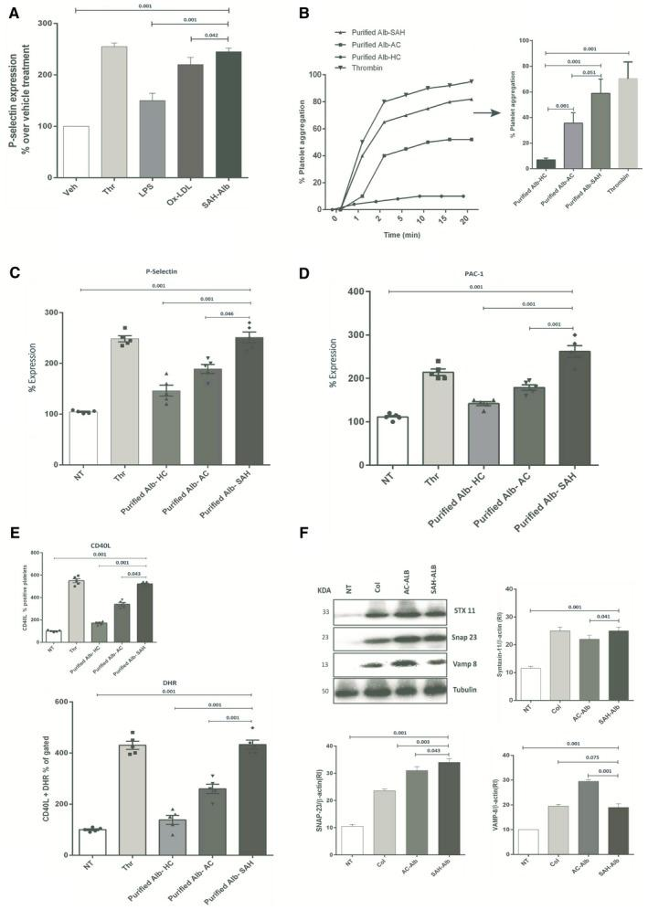 Purified albumin induces activation and ROS production in healthy platelets. (A) SAH albumin increases the expression of P‐selectin compared with lipopolysaccharide and oxidized low‐density lipoprotein. (B) Platelets were incubated with purified albumin‐HC (Alb‐HC, 1 mg/mL), purified albumin‐AC (Alb‐AC, 1 mg/mL), and purified albumin‐SAH (Alb‐SAH, 1 mg/mL). Platelet aggregation was measured after 30 minutes according to the final protocol at 37°C. A representative recording and bar graph is shown in mean values of three independent experiments, expressed as a percentage of maximal platelet aggregation. (C,D) Histogram showing the up‐regulation of P‐selectin, PAC‐1, and intracellular Ca2+ in platelets exposed to purified Alb‐SAH (1 mg/mL) versus others (percent expression). (E) Increased CD40L and ROS production in platelets exposed to Alb‐SAH compared with others (results shown as percentage of vehicle treatment; n = 3). (F) Representative western blot expression of SNARE complex protein Syntaxin‐11, SNAP‐23, and VAMP‐8 levels in healthy platelets incubated with purified Alb‐HC, Alb‐AC, or Alb‐SAH (1 mg/mL). All values are shown as mean ± SEM (* P