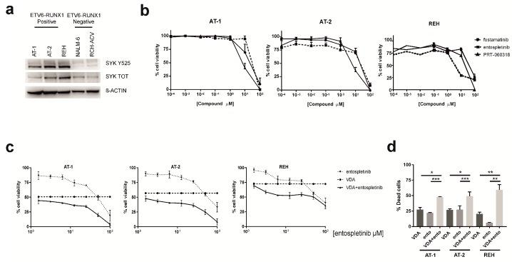 SYK inhibition in ETV6-RUNX1 cell lines enhances the efficacy of conventional chemotherapeutics. ( a ) Western blot analysis for SYK Y525 and its total form in ETV6-RUNX1 -positive (AT-1, AT-2 and REH) and negative ( NALM-6 and RCH-ACV ) cell lines. ( b ) Cell viability measured by MTT test of ETV6-RUNX1 cell lines treated for 72 h with SYK inhibitors. All experiments were performed at least three times, and data are represented as mean ± SEM. ( c ) Reduction of cell viability, determined by MTT test, in AT-1, AT-2 and REH cells after 48 h of treatment with entospletinib and 1 unit of VDA (corresponding to a cocktail of 1 nM VCR, dex and AraC respectively) alone or in combination ( n = at least three for all experiments). Results are presented as means ± SEM. ( d ) Increased cell death determined by Annexin V/PI staining after 48 h of treatment. AT-1, AT-2 and REH cells were treated with 1 unit of VDA and 50 μM of entospletinib (ento) alone or in combination. The percentage of dead cells, defined as the total of Annexin V + /PI − , Annexin V + /PI + and Annexin V − /PI + , was established after normalizing on DMSO-treated cells. Paired t test; * p ≤ 0.05, ** p ≤ 0.01; *** p ≤ 0.001; n = 3 for all experiments. Results are presented as means ± SEM. VDA and ento concentrations used in these experiments were selected on the basis of MTT test results, by choosing the ones most able to reduce cell viability in combination.