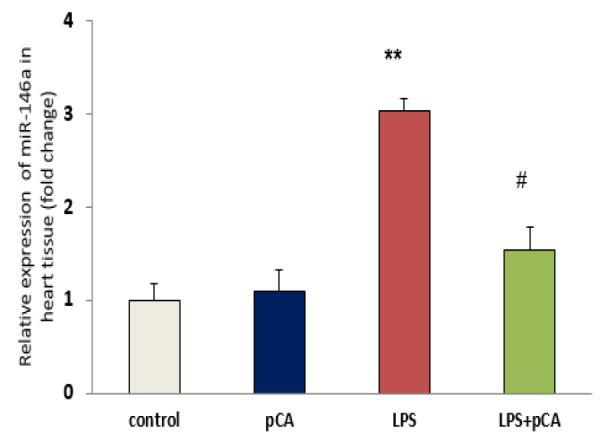 PCA pre-treatment effects on cardiac injury following LPS-induced lung inflammation. The relative expression of miR-146a in heart tissue of ALI rat was measured by qRT-PCR. Values are expressed as mean±SEM (n=8). **p