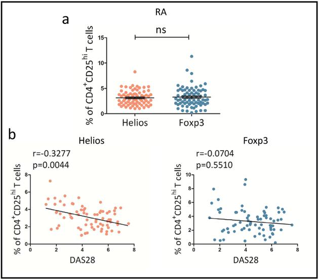Helios is more closely associated with disease activity than Foxp3 on CD4 + <t>CD25</t> hi T cells in RA patients. (a) The expression of Helios in CD4 + CD25 hi T cells was similar to Foxp3 on RA Tregs ( p > 0.05). (b) The expression of Helios in CD4 + CD25 hi T cells was negatively correlated with DAS28 score (r=−0.3277, p =0.0044) (left), while the expression of Foxp3 was not associated with DAS28 score on these T cells ( p > 0.05) (right). The p value was measured with Mann-Whitney test. Correlation analyses were carried out using Spearman's rank correlation test. n.s., not significant.