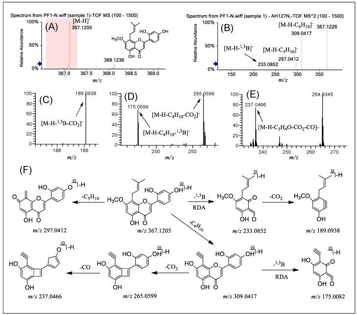 (−) ESI-Q-TOF-MS/MS and LTQ-Orbitrap-MS n ( n = 3–4) spectra of PF 1 in group A and the fragmentation pathways proposed for PF 1 . Q-TOF-MS ( A ), Q-TOF-MS 2 ( B ), LTQ-Orbitrap-MS 3 of the ions at m / z 233.0852 from m / z 367.1205 ( C ), LTQ-Orbitrap-MS 3 of the ions at m / z 309.0417 from m / z 367.1205 ( D ), LTQ-Orbitrap-MS 4 of the ions at m / z 265.0599 from m / z 309.0417 ( E ), and the proposed fragmentation pathways for PF 1 ( F ). RDA: retro Diels–Alder.