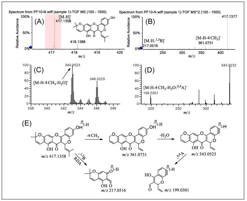 (−)ESI-Q-TOF-MS/MS and LTQ-Orbitrap-MS n ( n = 3–4) spectra of PF 10 in group B and the fragmentation pathways proposed for PF 10 . Q-TOF-MS ( A ), Q-TOF-MS 2 ( B ), LTQ-Orbitrap-MS 3 of the ions at m / z 361.0731 from m / z 417.1358 ( C ), LTQ-Orbitrap-MS 4 of the ions at m / z 343.0523 from m / z 361.073 ( D ), and the proposed fragmentation pathways for PF 10 ( E ). RDA: retro Diels–Alder.