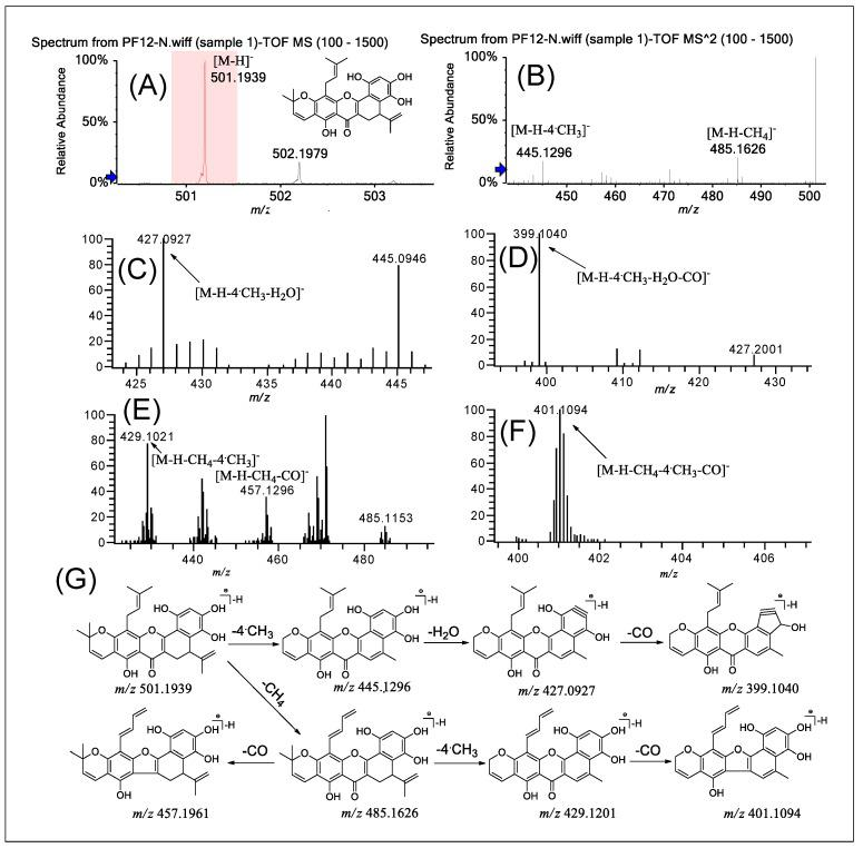(−)ESI-Q-TOF-MS/MS and LTQ-Orbitrap-MS n ( n = 3–4) spectra of PF 12 in group B and the fragmentation pathways proposed for PF 12 . Q-TOF-MS ( A ), Q-TOF-MS 2 ( B ), LTQ-Orbitrap-MS 3 of the ions at m / z 445.1296 from m / z 501.1939 ( C ), LTQ-Orbitrap-MS 4 of the ions at m / z 427.0927 from at m / z 445.1296 ( D ), LTQ-Orbitrap-MS 3 of the ions at m / z 485.1631 from m / z 501.1939 ( E ), LTQ-Orbitrap-MS 4 of the ions at m / z 429.1201 from m / z 485.1631 ( F ), and the proposed fragmentation pathways for PF 12 ( G ).