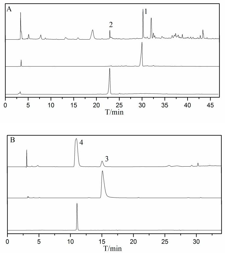 The HPLC-UV analysis of A, B, and HSCCC fractions; column: YMC-Triart C 18 EXRS (250 mm × 4.6 mm, i.d., 5μm); mobile phase: Solvent: Distilled water (S 1 ) and methanol (S 2 ); gradient (A): 0.0 min (10% S 2 )–40 min (95% S 2 ); gradient (B): 0.0 min (10% S 2 )–35 min (95% S 2 ); flow rate: 0.8 mL/min; wavelength: 254 nm; temperature: 30°C; sampling volume: 20 μL; detector: <t>1260</t> Quat Pump VL (G1311C).