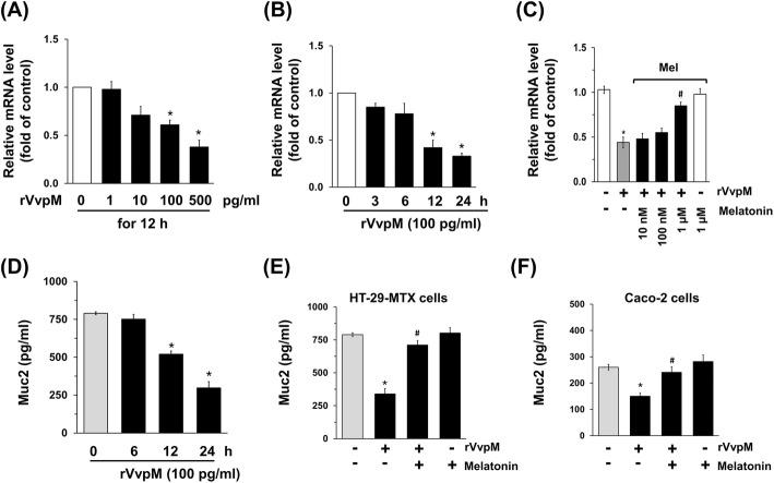 Melatonin regulates the level of Muc2 in intestinal epithelial cells treated with rVvpM. Dose ( a ) and time ( b ) responses of rVvpM in Mucin (Muc) 2 mRNAs of HT29-MTX cells are shown. Data represent means ± S.E. n = 5. *, p