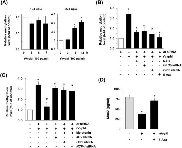 Regulatory effect of melatonin on hypermethylation of Muc2 promoter induced by rVvpM. a Genomic DNA treated with rVvpM for 12 h was prepared. Time responses of rVvpM in methylation status of Muc2 gene at − 274 and − 193 CpG sites were determined by methyl-specific PCR (MSP) analysis. The relative level of Muc2 methylation is shown, compared to the unmethylated form. Data represent means ± S.E. n = 4. *, p