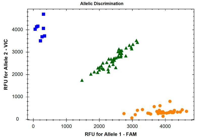 Allelic discrimination X-Y scatter-plot of the c.804-7C > A SNP (rs1799913) of the TPH1 gene. The TaqMan ® SNP Genotyping Assay (ID: C___2645661_10) was used for genotyping of this SNP. The χ -axis represents the relative fluorescent emission for the A allele-specific probe labelled with 6-carboxyfluorescein (FAM), and the Ɣ -axis represents the emission for the C allele-specific probe labelled with 2'-chloro-7'-phenyl-1,4-dichloro-6-carboxyfluorescein (VIC). Circles: homozygous A/A; squares: homozygous C/C; triangles: heterozygous C/A.