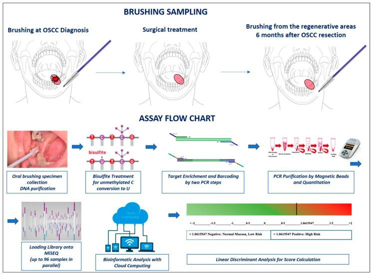 The assay design is based on various steps: (1) In the present study, sampling cell collection was performed at two different moments: before any cancer treatment and during patient follow-up almost 6 months after OSCC treatment; (2) DNA purification and bisulfite treatment (unmethylated cytosines are chemically converted to uracils, while methylated cytosines remained unchanged); (3) Target-specific amplification of 13-gene panel ( ZAP70, ITGA4, KIF1A, PARP15, EPHX3, NTM, LRRTM1, FLI1, MIR193, LINC00599, MIR296, TERT , and GP1BB ) and barcoding using Nextera™ index kit (Illumina); (4) PCR purification, quantification and pooling; (5) loading onto MiSEQ; (6) DNA methylation level of a series of 243 CpGs representatives of the 13-gene promoters was calculated in cloud computing using different web tools: BSPAT, BWAmeth, MethylDackel, Kismeth and finally EPIC-TABSAT; (7) score calculation: An algorithm of choice was used to calculate the final score of each sample. This was done multiplying the DNA methylation level of the most informative CpGs previously identified for the corresponding coefficient and adding the constant (see Morandi et al. for details [ 15 ]).