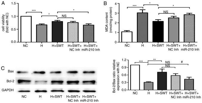 miR-210 inhibition blocks the protective effect of SWT. (A) Cell viability was determined using an MTS assay (n=4). (B) MDA levels were assessed using the thiobarbituric acid method (n=4). (C) Expression of <t>apoptosis-associated</t> proteins demonstrated by western blot analysis (n=3). *P