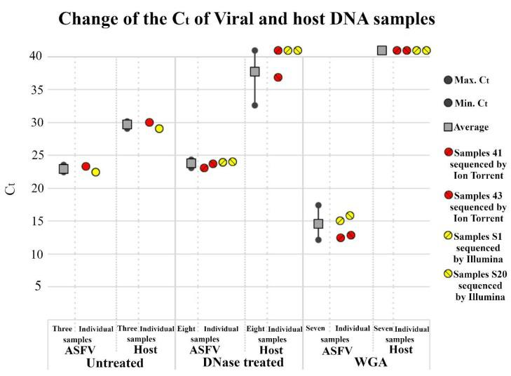 Host and viral DNA content of differently treated ASFV samples. Quantitative dual PCR was executed by Virotype ASFV PCR Kit. C t values of individual and averaged samples represented by colored circles and grey box respectively. Averages were calculated from numbers of samples indicated on X axis. Gray circles indicate minimum and maximum values. C t values higher than 40 (undetectable host DNA) are represented by 41. Whole genome amplification (WGA) was executed by REPLI-g Mini Kit.