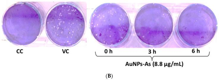 Virucidal effects of AuNPs-As. ( A ) Vero cells were infected with MeV previously exposed to AuNPs-As at different times. The virucidal effect was determined by PFU reduction and qPCR assays. PFU count and viral RNA number are given in % to that for the untreated virus-infected control cells (Viral control), which was defined as 100%. ( B ) Representative images of the virucidal effect of AuNPs-As, showing cellular control (CC), viral control (VC), and treatment at different periods of incubation (0, 3, 6 h). The data shown are the mean ± SD from three replicated experiments. α ≤ 0.05 (*) compared vs viral control.