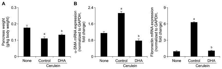 Effect of docosahexaenoic acid (DHA) on pancreatic damage and mRNA levels of α-smooth muscle actin (α-SMA) and fibronectin in pancreas. (A) Pancreatic weight and body weight were measured after treatment with cerulein and DHA. (B) mRNA levels of α-SMA and fibronectin were determined by reverse transcription-PCR. mRNA expression was normalized to glyceraldehyde-3-phosphate dehydrogenase (GAPDH) expression. None, untreated mice; Control, mice treated with cerulein alone; DHA, mice treated with cerulein and DHA. Values are presented as mean ± SE. a P