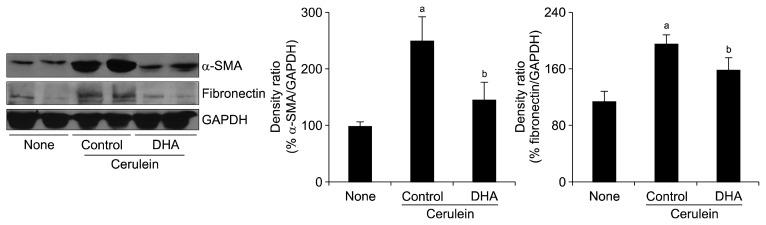 Effect of docosahexaenoic acid (DHA) on protein expression levels of α-smooth muscle actin (α-SMA) and fibronectin in pancreas. Protein expression of α-SMA, fibronectin, and glyceraldehyde-3-phosphate dehydrogenase (GAPDH) was determined by Western blot analysis. Expression levels of α-SMA and fibronectin were compared to that of GAPDH (loading control) and expressed as a percentage ratio of the band density. None, untreated mice; Control, mice treated with cerulein alone; DHA, mice treated with cerulein and DHA. Values are presented as mean ± SE. a P