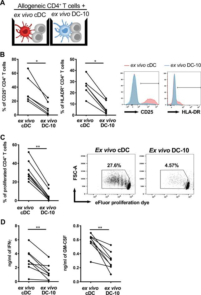 Ex vivo DC-10 promote hypo-responsiveness in allogeneic naïve CD4 + T cells. a Scheme of the experiment: naïve CD4 + T cells were cultured with ex vivo DC-10 (CD14 + CD16 + CD141 + CD163 + ) or ex vivo cDCs (CD1c + CD11c + ) FACS isolated from the peripheral blood of healthy donors (ratio 10:1) for 5 days. b Expression of the activation markers CD25 and HLA-DR on CD4 + T cells stimulated with ex vivo cDCs (red) or ex vivo DC-10 (blue) were evaluated by flow cytometry ( n = 6). The following gating strategy was applied: doublet exclusion, followed by alive cells and gating on CD3 + CD4 + cells. Left, each dot represents a single donor; right, flow cytometry histograms from one representative donor. c Naive CD4 + T cell proliferation was evaluated by proliferation dye dilution ( n = 8). The following gating strategy was applied: doublet exclusion, followed by alive cells and gating on CD3 + CD4 + cells. The percentage of proliferated cells is shown for each single donor (left panel) and in representative dot plots (right panels). d IFN-γ and GM-CSF in culture supernatants were measured by ELISA ( n = 8). Each dot represents a single donor. * P ≤ 0.05 ** P ≤ 0.01 (Wilcoxon matched pairs test, two-tailed)