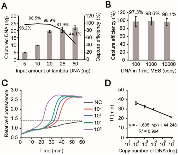 Characterization and evaluation of the iLAMP system. Evaluation of <t>DNA</t> capture by the chitosan-modified filter paper in the iLAMP device using <t>λ-DNA</t> samples. ( A ) The average DNA capture efficiencies were above 96% when input was between 5–20 ng (mean ± SD, n = 3). ( B ) The average capture efficiencies were above 96% when 10,000, 1000, or even 100 copies of λ-DNA were diluted in 1 mL MES (mean ± SD, n = 3). ( C ) Validation of on-chip amplifications of 0, 10 2 , 10 3 , 10 4 , and 10 6 copies of templates. The experiments were repeated three times and only one set of results were shown here. ( D ) The fitted curve between the log of the template copy number and the threshold time (Tt) in the fluorescence graphs (mean ± SD, R 2 = 0.994, n = 3).