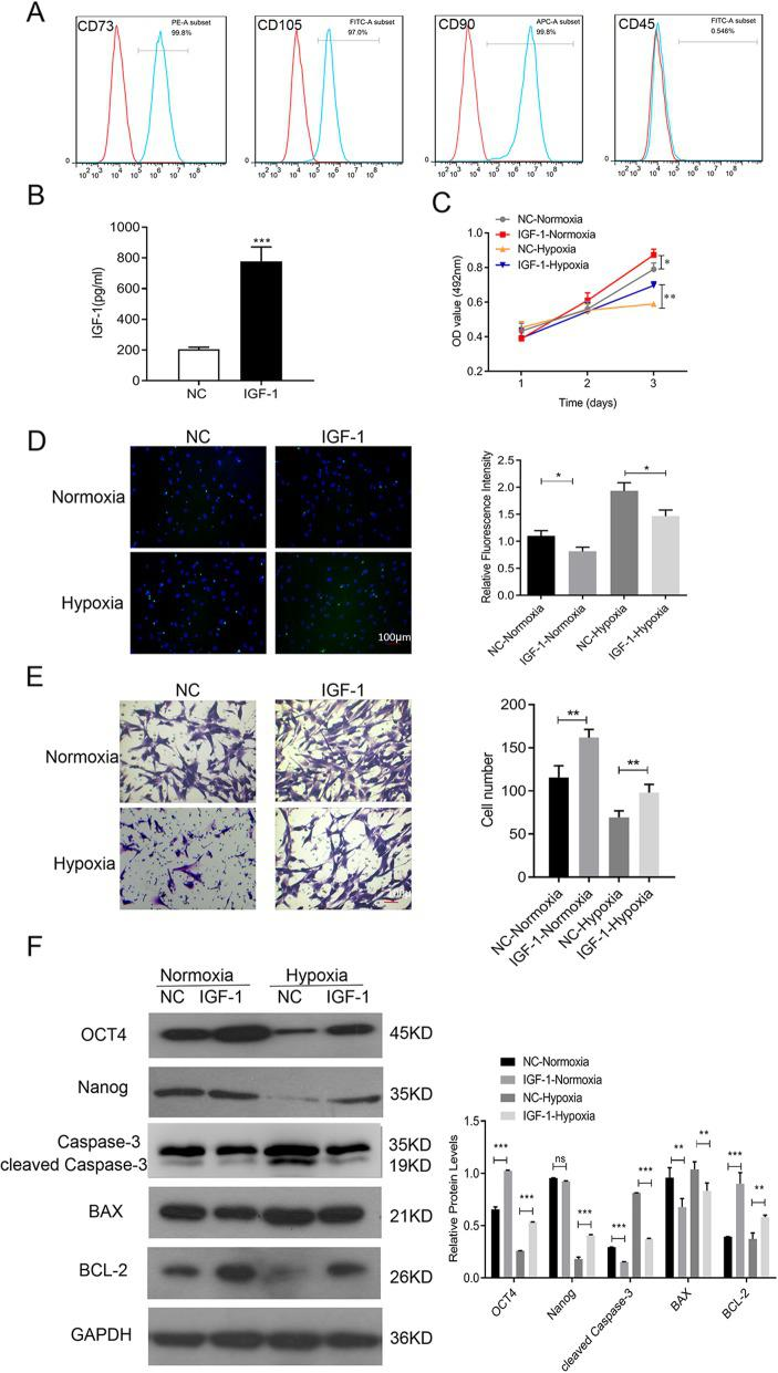Effect of IGF-1 overexpression on BMSCs. a Identification of BMSCs by flow cytometry analysis. b Supernatants from cultured BMSCs-NC and BMSCs-IGF-1 were collected and subjected to ELISA to determine IGF-1 levels. c Cells were exposed to hypoxia for 48 h, and cell proliferation was determined by MTS assay. d Apoptosis was determined by TUNEL assay. e Cell migration was determined by Transwell assay. f Expression of OCT4, NANOG, cleaved caspase-3, BAX, and BCL-2 was determined by Western blotting. All assays were performed in triplicate (* P