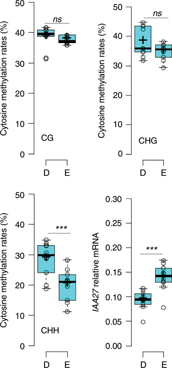 Promoter CHH methylation and expression of IAA27 differ between CLSY1 allelic variants. Average DNA methylation rates in CHH, CHG and CG context and average IAA27 mRNA abundance in n = 10 accessions carrying the CLSY1 D-allele (D) and n = 10 accessions carrying the CLSY1 E-allele (E). Cytosine methylation was determined over an upstream region of IAA27 (chr04:14327600-14329000 bp, Col-0 genome, TAIR10). IAA27 transcript levels were determined relative to PP2A using qRT-PCR on roots from three independent experiments per genotype with 18 roots per experiment pooled for RNA extraction. ***: significant difference at P