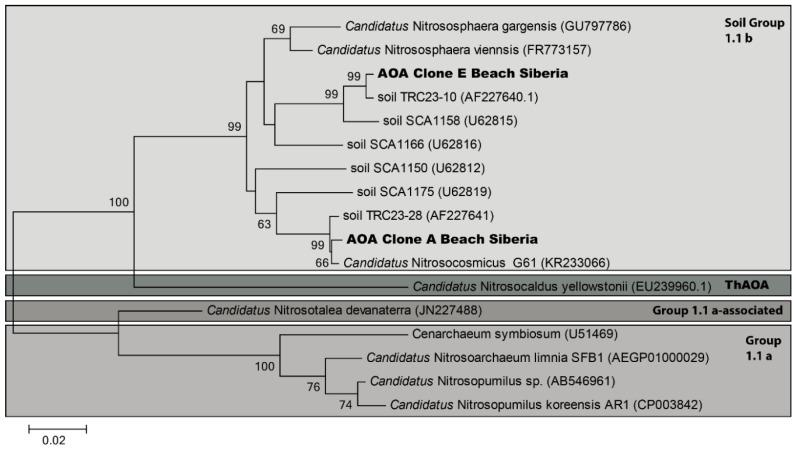 Maximum-likelihood tree depicting the phylogenetic relationships between the archaeal 16S rRNA gene sequences of cloning products of soils from the beach and other Thaumarchaeota -like sequences in group 1a + b and selected cultured representatives. The tree was constructed using sequences of ±900 b.p. Nodes supported by bootstrap values are indicated. Scale bar = 2% sequence divergence.