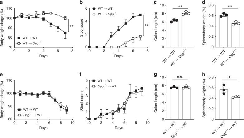Non-hematopoietic cells in Opg −/− mice contribute to relief of DSS colitis symptoms. a , e Daily changes in body weight during dextran sodium sulfate (DSS)-induced colitis. Changes in body weight percentage were calculated by dividing the body weight on the specified day by the body weight at day 0. b , f Fecal clinical scores were measured as described in the Methods. c , g Colon length was measured after sacrifice at day 8. d , h Spleen weight was measured after sacrifice at day 8. WT or Opg −/− recipient mice following bone marrow transplantation from WT donors ( a – d ) and WT recipient mice following bone marrow transplantation from WT or Opg −/− donors ( e – h ) treated with 1.5% DSS for 7 days. Data are representative of two independent experiments. ** p