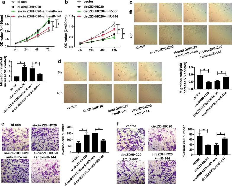 MiR-144 was involved in the regulation of circZDHHC20 on trophoblast cell proliferation, migration, and invasion. MTS assay for cell proliferation ( a , b ), wound healing assay for cell migration ( c , d ), transwell assay for cell invasion ( e , f ) in HTR-8/SVneo cells transfected with si-con, si-circZDHHC20, si-circZDHHC20 + anti-miR-con, si-circZDHHC20 + anti-miR-144, negative control plasmid (vector), circZDHHC20 overexpression plasmid (circZDHHC20), circZDHHC20 + miR-con mimic, or circZDHHC20 + miR-144 mimic. * P
