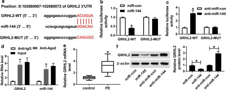 GRHL2 was a direct target of miR-144. a Schematic of the complementary site for miR-144 in the 3′-UTR of GRHL2 and the mutation of the seed region. b , c Relative luciferase activity in HTR-8/SVneo cells introduced with GRHL2-WT or GRHL2-MUT together with miR-con mimic, miR-144 mimic, anti-miR-con or anti-miR-144. d The enrichment of GRHL2 and miR-144 in the RISC of HTR-8/SVneo cells using anti-Ago2 or IgG antibody, with Input content as positive control. e qRT-PCR for GRHL2 mRNA in placental tissues from 26 PE patients and 15 healthy volunteers. f Western blot for GRHL2 protein level in HTR-8/SVneo cells transfected with miR-con mimic, miR-144 mimic, anti-miR-con, or anti-miR-144. * P
