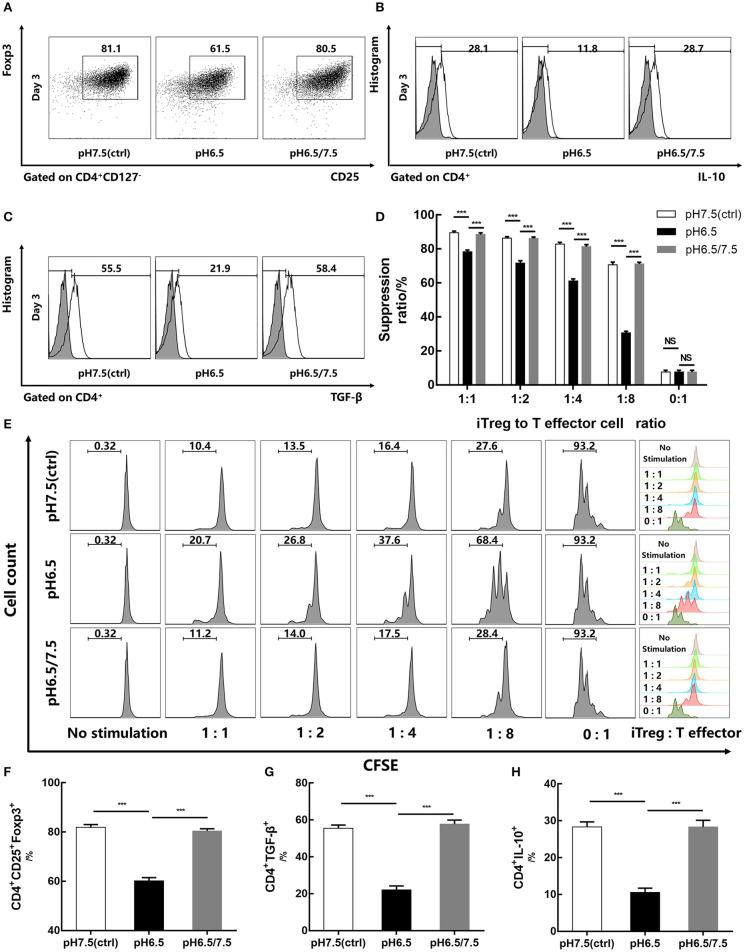 Reversal of acidic microenvironment restores Foxp3 expression and iTreg function. (A) The proportion of CD4 + CD25 + Foxp3 + iTregs cultured with IL-2 and TGF-β for 3 days. (B,C) The proportion of CD4 + IL-10 + and CD4 + TGF-β + T cells cultured with IL-2 and TGF-β for 3 days and stimulated with phorbol 12-myristate 13-acetate, brefeldin A, and <t>ionomycin</t> for 6 h before the assay. (D) Statistical analysis of the suppression assay in vitro . (E) iTregs induced in media of varying pH values for 3 days were co-cultured with carboxyfluorescein succinimidyl ester-stained human naïve CD4 + T cells (responders) at the indicated ratio. After 72 h of activation with anti-CD3/CD28-conjugated beads, responder cell proliferation was assessed by flow cytometry. (F–H) Statistical analysis of related results of flow cytometry. Data are presented as the means ± SD from three independent experiments. *** p