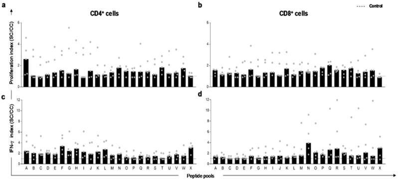 In vitro proliferation and IFN-γ production by T-lymphocytes in peripheral blood mononuclear cells (PBMC) of L. infantum naturally infected dogs after stimuli with predicted peptides. The spots represent indexes of T-cell responses to Leishmania infantum peptide pools in PBMC of naturally infected and asymptomatic dogs ( n = 5 in gray circles). Proliferation index of CD4 + ( a ) and CD8 + ( b ) lymphocytes after peptide pool stimuli. ( c ) Index of IFN-γ producing by CD4 + and CD8 + ( d ) lymphocytes after peptide pool stimuli. Indexes were calculated based on SLA (soluble Leishmania antigen)-stimulated (SC) cultures divided by the control culture (CC). Cut-off (dashed line) for responses was calculated by the control culture indexes (cut-off = 1).