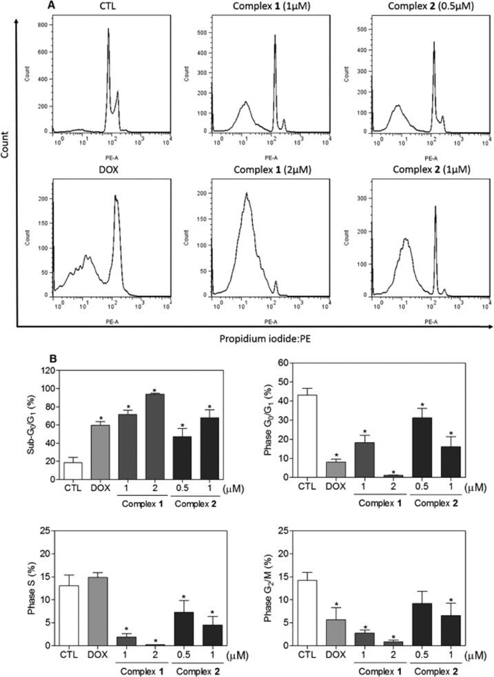 Effect of complexes 1 and 2 in the cell cycle distribution of HL-60 cells, as determined by flow cytometry using propidium iodide staining after 24 h incubation. (A) Representative flow cytometric histograms. (B) Quantification of sub-G 1 (internucleosomal DNA fragmentation), G 0 /G 1 , S, and G 2 /M percentage distribution. Negative control (CTL) was treated with vehicle (0.1% DMSO), and doxorubicin (DOX, 1 μM) was used as a positive control. Data are presented as mean ± S.E.M. of three independent experiments performed in duplicate. Ten thousand events were evaluated per experiment, and cellular debris omitted from analysis. * P