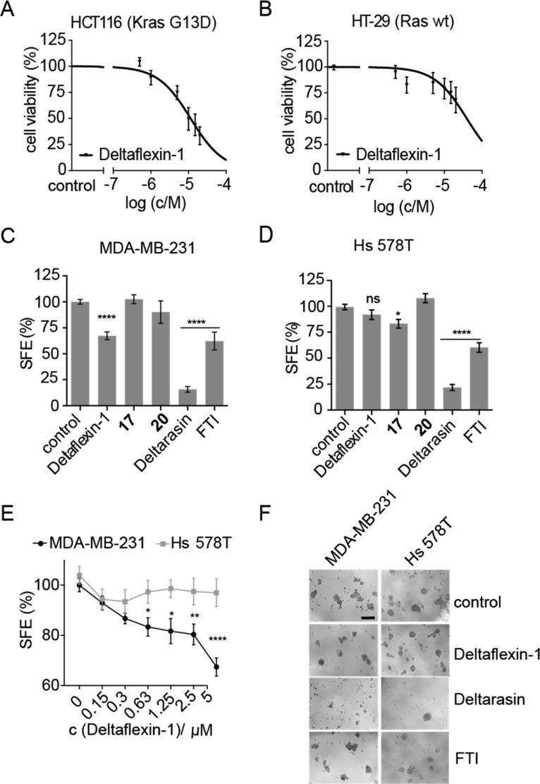 Deltaflexin-1 selectively inhibits oncogenic K-Ras-driven cell proliferation and mammosphere formation. (A,B) Dose-dependent cell viability in response to 72 h treatment with Deltaflexin-1 at concentrations ranging from 0 to 20 μM in HCT116 cells (A) and HT-29 cells (B). Graphs show mean values ± SEM, n = 4. (C,D) Sphere formation efficiency (SFE) of MDA-MB-231 cells (C), n = 11, and Hs 578T cells (D), n = 7, cultured in suspension culture for 6 days, followed by a 72 h incubation with 5 μM Deltaflexin-1 or Deltarasin, 0.5 μM FTI or 0.1% DMSO control. Graphs show mean values ± SEM. (E) Deltaflexin-1 dose-dependent effect on SFE with the same protocol as in (C,D). Graphs show mean values ± SEM, n = 4. The SFE is significantly different between MDA-MB-231 and Hs 578T above 0.63 μM. (C–E) Statistical significance levels are annotated as ns, not significant; * p