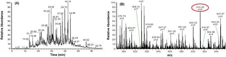 (A) Base peak chromatogram of tissue sample on <t>Orbitrap</t> <t>LTQ-LC/MS–CID</t> activation. (B) Expanded region of a single FTMS full scan, with a mass range of m/z 400–1800, and ion peaks with double or higher charge (612.30, z = 3).