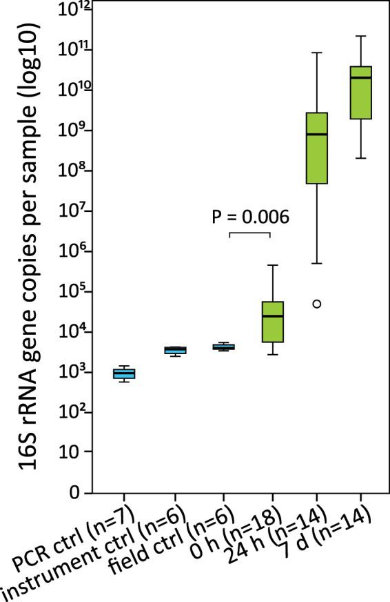 16S rRNA gene copy numbers per sample. Blue colour indicates the negative controls and green the foal rectal samples. The boxes represent the interquartile ranges (IQR) containing 50% of samples. The horizontal line in a box indicates the median. Whiskers show maxima and minima within 1.5 × IQR. The circle indicates an outlier.