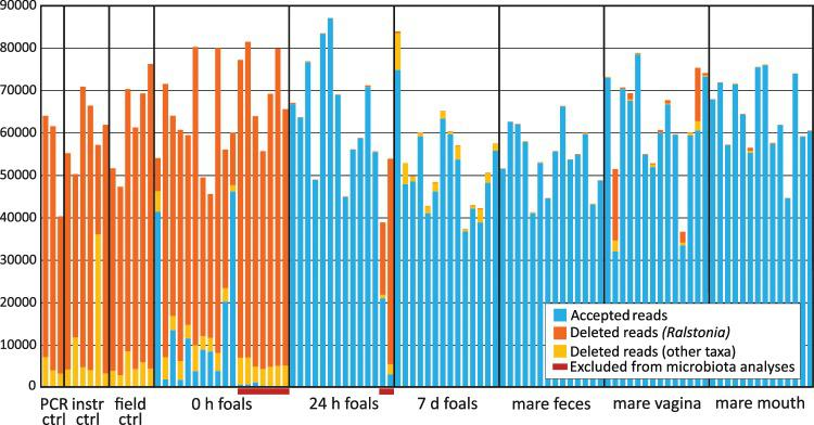 Accepted and rejected 16S rRNA gene sequence reads per sample. Accepted reads are indicated as blue. Deleted reads are indicated as yellow-orange, with reads classified as Ralstonia in orange. Seven 0 h samples and two 24 h samples were excluded from further analysis due to low quality (red bars). Negative control data processed with the 0 h foal data is shown.