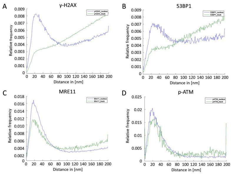 Ripley's K statistics of γ-H2AX ( A ) and 53BP1 ( B ), MRE11 ( C ) and p-ATM ( D ) signal points locating in the nucleus (blue) or inside the γ-H2AX-defined DNA damage track (green).