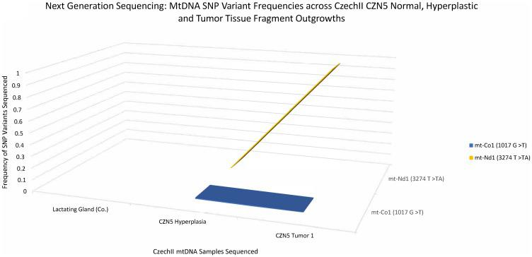 CzechII mammary CZN5 tumor 1 mtDNA SNP variant calling via Next Generation sequencing. Next Generation sequencing was performed on CZN5 tumor 1 that arose from a CzechII CZN5 hyperplasia. SNP variant calling was performed to analyze common somatic SNPs that were conserved across CZN5 hyperplasia and tumor outgrowth, in comparison to CzechII lactating mammary gland control.