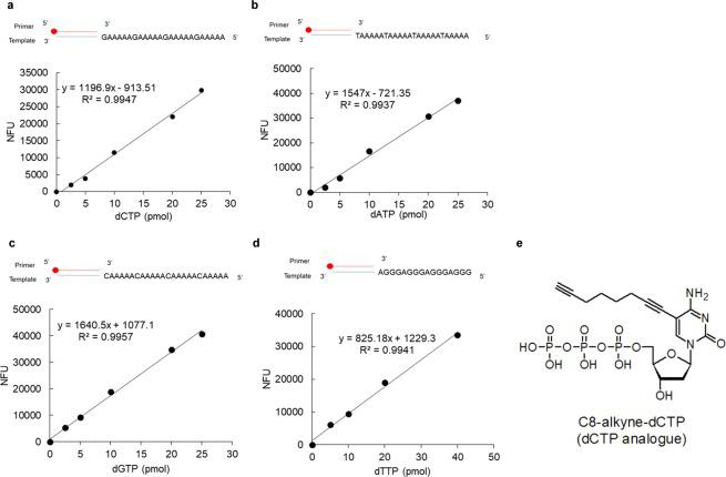Standard curves for dNTP measurements. Templates as indicated were incubated with Zgene Taq polymerase in the presence of increasing amounts of ( a ) dCTP, ( b ) dATP and ( c ) dGTP together with EdUTP as described in Materials and Methods. ( d ) For dTTP measurement, templates were incubated with Vent (exo-) in the presence of known amounts of dTTP and C8-Alkyne-dCTP. The oligonucleotides pull-down using streptavidin Sepharose were labeled with 5-TAMRA-azide by click reaction. Fluorescence units of control reactions without dNTPs were subtracted from the values obtained in order to give normalized fluorescence units (NFU). ( e ) The chemical structure of C8-alkyne-dCTP.