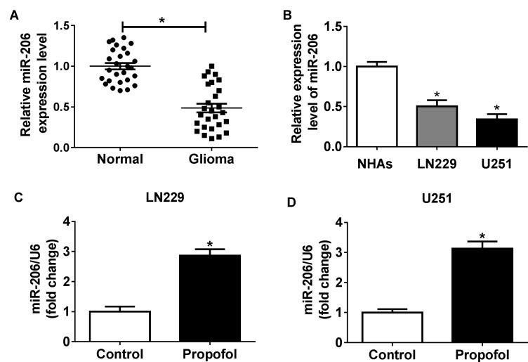 Propofol promotes the expression of miR-206 in glioma cells. ( A, B ) The expression of miR-206 in glioma tissues, non-tumor tissues, glioma cell lines, and NHAs was measured using qRT-PCR. ( C, D ) The expression of miR-206 in U251 and LN229 cells treated with or without propofol was examined by qRT-PCR. * P