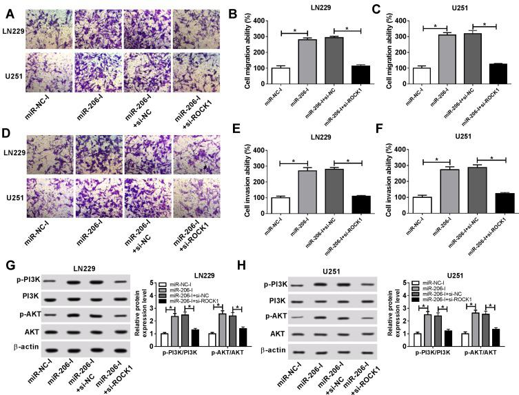 Propofol inhibits the migration, invasion, and PI3K/AKT pathway activation of glioma cells by miR-206/ROCK1 axis. U251 and LN229 cells were transfected with miR-NC-I, miR-206-I, miR-206-I + si-NC, or miR-206-I + si-ROCK1 prior to propofol treatment. ( A–F ) Cell migration and invasion abilities were demonstrated using a transwell assay. ( G, H ) Western blot was utilized to examine the expression of p-PI3K, PI3K, p-AKT, and AKT. * P