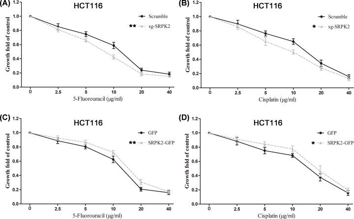 SRPK2 regulates the chemotherapeutic resistance of wtp53 CRC cells ( A and B ) SRPK2 silencing significantly decreased the chemotherapeutic resistance to 5-fluorouracil (A) or cisplatin (B) in HCT116 cells. ( C and D ) SRPK2 overexpression significantly enhanced the chemotherapeutic resistance to 5-fluorouracil (C) or cisplatin (D) in HCT116 cells. Data are shown as the mean ± SD. Statistical significance was determined by Student's t -test. * P