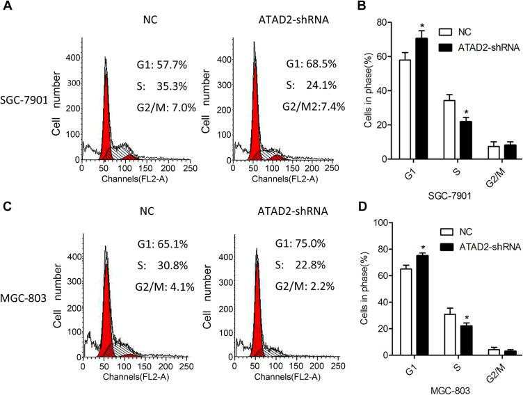 Knockdown of ATAD2 inhibits G1/S phase transition of GC cells. ( A, B ) Cell cycle profiles were analysed by flow cytometer after SGC-7901 cells were transfected with pLV-GRP78 shRNA or pLV-control for 48 hrs. ( C, D ) Cell cycle profiles were analysed by flow cytometer after MGC-803 cells were transfected with pLV-GRP78 shRNA or pLV-control for 48 hrs. Data were from three independent experiments and expressed as means ± SD; (* P
