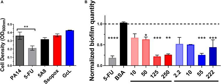 Lactonase treatment is not cytotoxic, acts in a dose dependent manner, and is effective at inhibiting biofilm formation in Pseudomonas aeruginosa . (A) Cell density of P. aeruginosa PA14, without treatment (control; dark gray bar), or with addition of 5-FU (5′-fluorouracil; 60 μM; light gray bar), SsoPox mutant 5A8 (an inactive lactonase; 125 μg/mL; black bar), Ssopox W263I (a lactonase; 125 μg/mL; red bar), or GcL (a lactonase; 55 μg/mL; blue bar). Statistical analysis was performed using Student's t test. (B) Normalized PA14 biofilm quantity as quantified by Crystal Violet assay, using varying concentrations of Ssopox W263I (red bars), GcL (blue bars), or controls 5-FU (fluorouracil; 60 μM; gray bar), or BSA (bovine serum albumin; 100 μg/mL; black bar). Concentrations of Ssopox W263I and GcL are μg/mL. Statistical analysis was performed using Student's t test. ∗ indicate statistical significance. Maximal inhibition of biofilm was at 125 μg/mL for Ssopox, and 55 μg/mL for GcL.