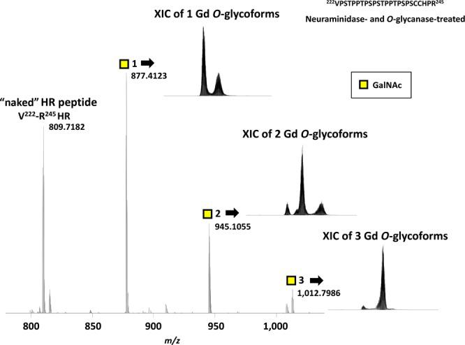 """Mass spectrum and extracted ion chromatogram (XIC) of IgA1 HR peptide and glycopeptides with Gd O -glycans after sequential deglycosylation. Sequential neuraminidase and O -glycanase treatment leaves only Gd O -glycan(s) at V 222 –R 245 HR. The respective peaks correspond to naked V 222 –R 245 HR and V 222 –R 245 HR with one, two, or three Gd O -glycans. The number of GalNAc residues attached to HR is designated by the number after yellow squares. The theoretical monoisotopic mass values of """"naked"""" V 222 –R 245 HR peptide and V 222 –R 245 HR glycopeptide with one to three Gd O -glycans are shown beside the peaks. The XIC for each Gd O -glycoform is shown next to the respective ion peak."""