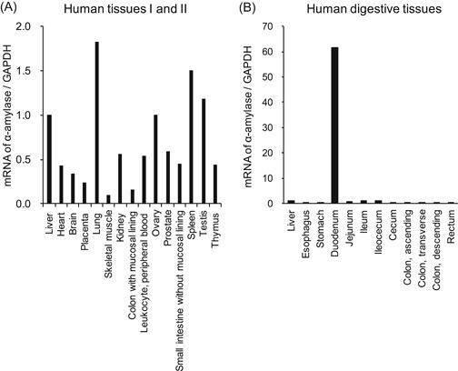Expression of <t>α‐amylase</t> in normal human tissues. The mRNA expressions of α‐amylase in human normal tissues were quantified by real‐time PCR. The α‐amylase/GAPDH ratio for liver was set as the baseline value to which all transcript levels were normalized. mRNA of α‐amylase/GAPDH in human tissues I and II across Human MTC Panel I and II (A) and in human digestive tissues across the Human Digestive System MTC Panel (B). GAPDH, glyceraldehyde‐3‐phosphate dehydrogenase; mRNA, messenger RNA; MTC, multiple tissue cDNA; PCR, Polymerase chain reaction