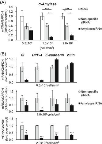 Effect of α‐amylase suppression on cell differentiation. Caco‐2 cells (0.5‐2.0 × 10 5 cells/cm 2 ) were transfected with none as a mock, nonspecific siRNA as a control, or the siRNA targeting α‐amylase. A, mRNA expression of α‐amylase. * P
