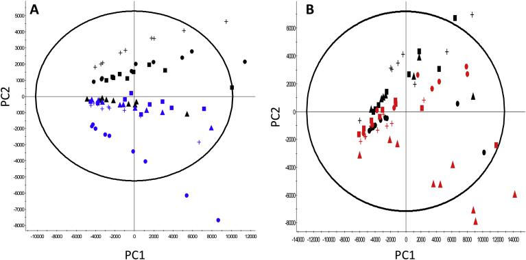 Analysis of cellular lipid content in control and LMM engineered CHO cells using mass spectrometry. (A) and (B) show Principal Component Analysis (PCA) of the mass spectrometry derived lipid profiles extracted from cells overexpressing either SREBF1 or SCD1 genes highlighting differences in lipidomic profiles of engineered CHOK1SV GS-KO cell lines harvested after 6 days of batch culture. Figure A shows PCA of control samples and samples engineered to overexpress SCD1; black data points represent controls (CHO-Ctl-1 = ●, CHO-Ctl-2 = ▲, CHO-Ctl-3 = +, CHO-Control POOL = ■) whilst blue data points represent SCD1 overexpressing cells (CHO-SCD1 LOW = Image 1 , CHO-SCD1 MID = +, CHO-SCD1 HIGH = Image 2 , CHO-SCD1 POOL = Image 3 ). Figure B shows analysis of control samples and samples engineered to overexpress SREBF1; black data points represent controls (CHO-Ctl-1 = ●, CHO-Ctl-2 = ▲, CHO-Ctl-3 = +, CHO-Control POOL = ■) whilst red data points represent SREBF1 overexpressing cells (CHO-SREBF1 LOW = Image 4 , CHO-SREBF1 MID1 = Image 5 , CHO-SREBF1 MID2 = Image 6 , CHO-SREBF1 POOL = Image 7 ). (For interpretation of the references to colour in this figure legend, the reader is referred to the Web version of this article.)