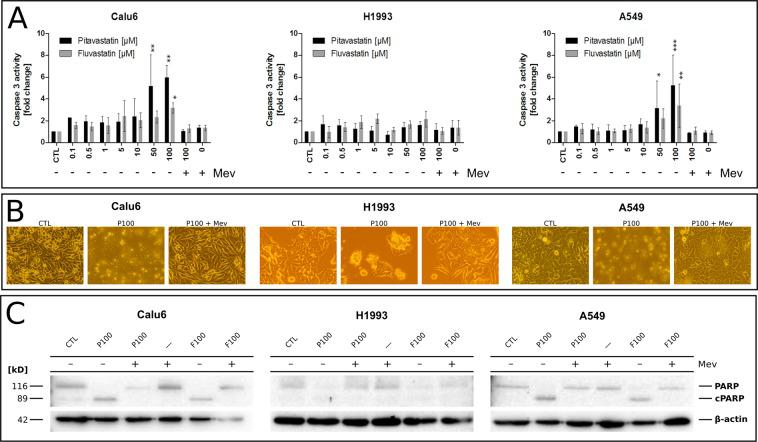 Statin-induced apoptosis and its lipid dependency in NSCLC cells. ( A ) Evaluation of <t>caspase</t> 3 activation in cells treated with up to 100 µM of either pitavastatin or fluvastatin for 48 h. Mevalonic acid (Mev, 1 mM) was used as rescue control counteracting statin-mediated intracellular depletion of sterol precursors. Mev and statin co-treated cells showed caspase 3 activity indistinguishable from untreated cells. One-way ANOVA, α = 0.05; Calu6 (pitavastatin): F(9,22) = 4.805, p = 0.0013; Calu6 (fluvastatin): F(9,16) = 2.207, p = 0.0801; H1993 (pitavastatin): F(9,26) = 1.337, p = 0.2664; H1993 (fluvastatin): F(9,21) = 2.794, p = 0.0252; A549 (pitavastatin): F(9,30) = 4.152, p = 0.0015; A549 (fluvastatin): F(9,18) = 3.411, p = 0.0128. Data are given as arithmetic mean of fold change relative to untreated control (CTL) ± SD from three independent experiments. Asterisks denote statistical significance as determined via Dunnett's multiple comparison test compared to untreated control (CTL): *p