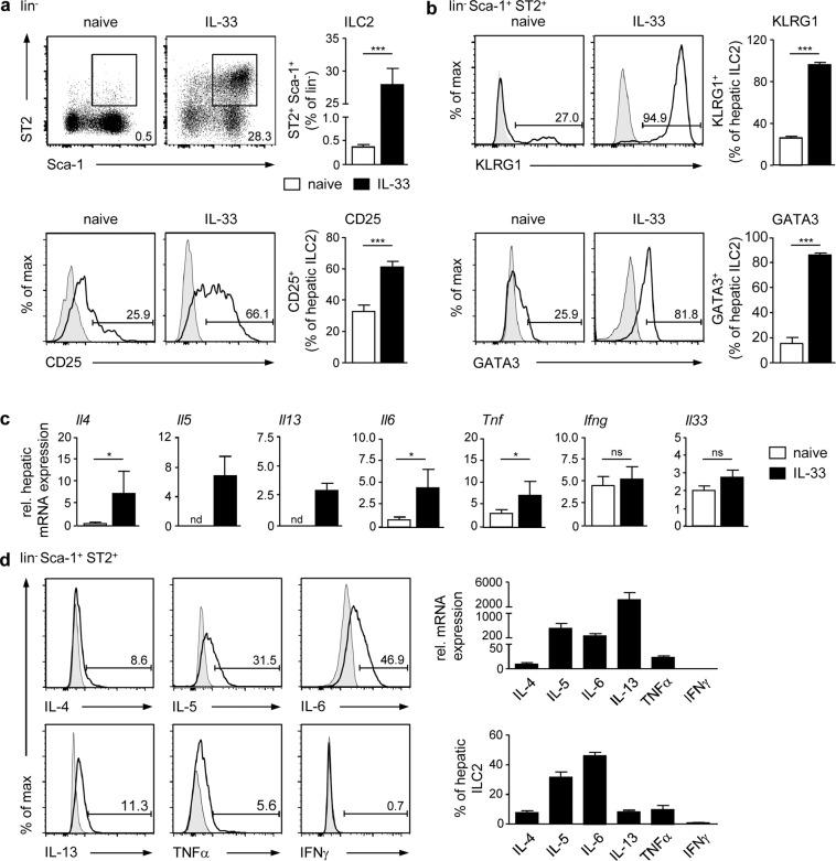 Phenotype of hepatic ILC2 in homeostasis and after IL-33 treatment. C57BL/6 mice were treated with rmIL-33 on four consecutive days. ( a ) Hepatic leukocytes from naive and IL-33-treated mice were stained for lin − <t>Sca-1</t> + ST2 + ILC2 and analysed by flow cytometry. Dot plots show frequencies of ILC2 in the liver. ( b ) Hepatic ILC2 were stained for KLRG1, CD25, and GATA3 and analysed by flow cytometry. ( c ) Hepatic mRNA expression was analysed by quantitative RT-PCR in relation to the reference gene GAPDH. ( d ) Hepatic ILC2 were isolated from IL-33-treated mice by FACS. Cytokine mRNA and protein expression were analysed by quantitative RT-PCR in relation to the reference gene GAPDH and by flow cytometry, respectively. Histograms show frequencies of protein-expressing hepatic ILC2. Bold line, antibody staining; filled graph, fluorescence minus one control. Mean ± SEM of 3–4 independent experiments with 3 mice per group are shown. Mann-Whitney U test. *p